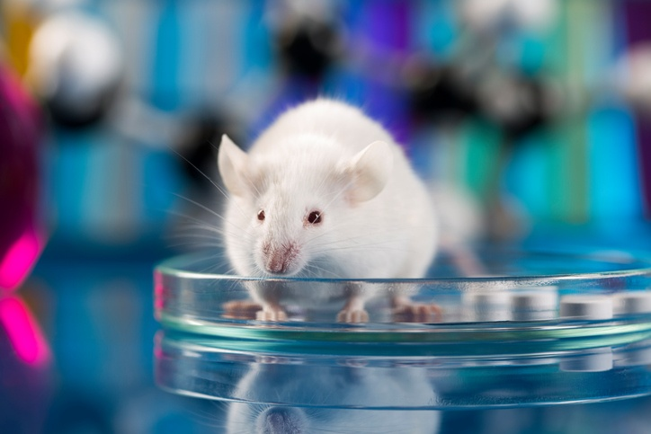 Temperature May Impact Gene Expression in Mice.jpg